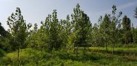 환경정화수(나무)